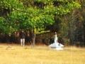Gingko trees, Tarchin Hearn Retreat, February 2009