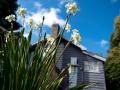 Springtime at the farmhouse